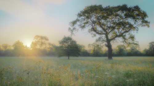 worcestershirewildlifetrust eadesmeadow meadow sunrise sun light tree grass morning sky yellow blue sony 2017 dew