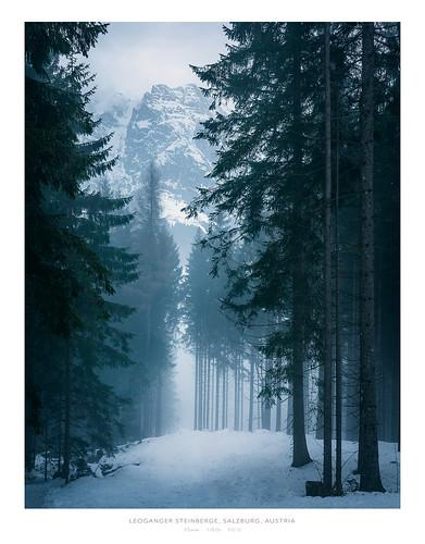 nikond810 sigma art sigma35mm landscape nature landschaft wald forest tree baum snow schnee winter austria österreich leogang nebel fog travel outdoors nikon 35mm breathtakinglandscapes