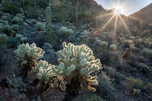 arizona pimacounty sonorandesert tucsonmountainpark usa unitedstates desert landscape outdoor sonoran