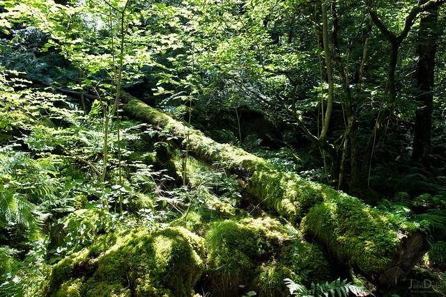 all the greens | keswick [explored]