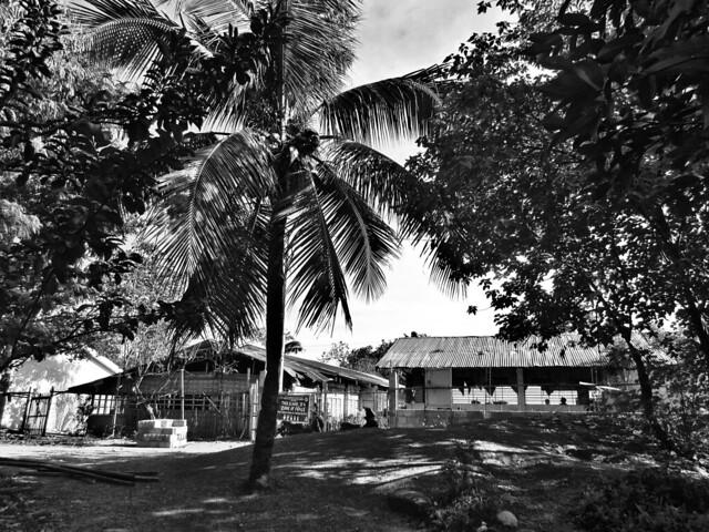 Beautiful Mindanao Common Houseplants and Stampsize Flower Garden 2017-2018