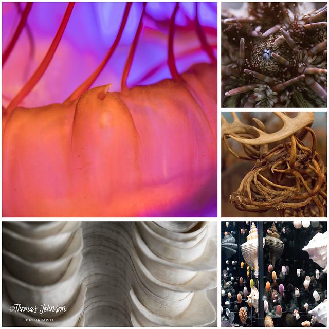 Wonders of Wildlife Collage