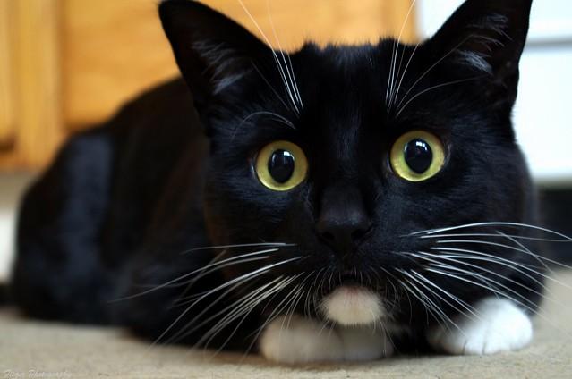 Happy World Cat Day ( Feb 17 2018)