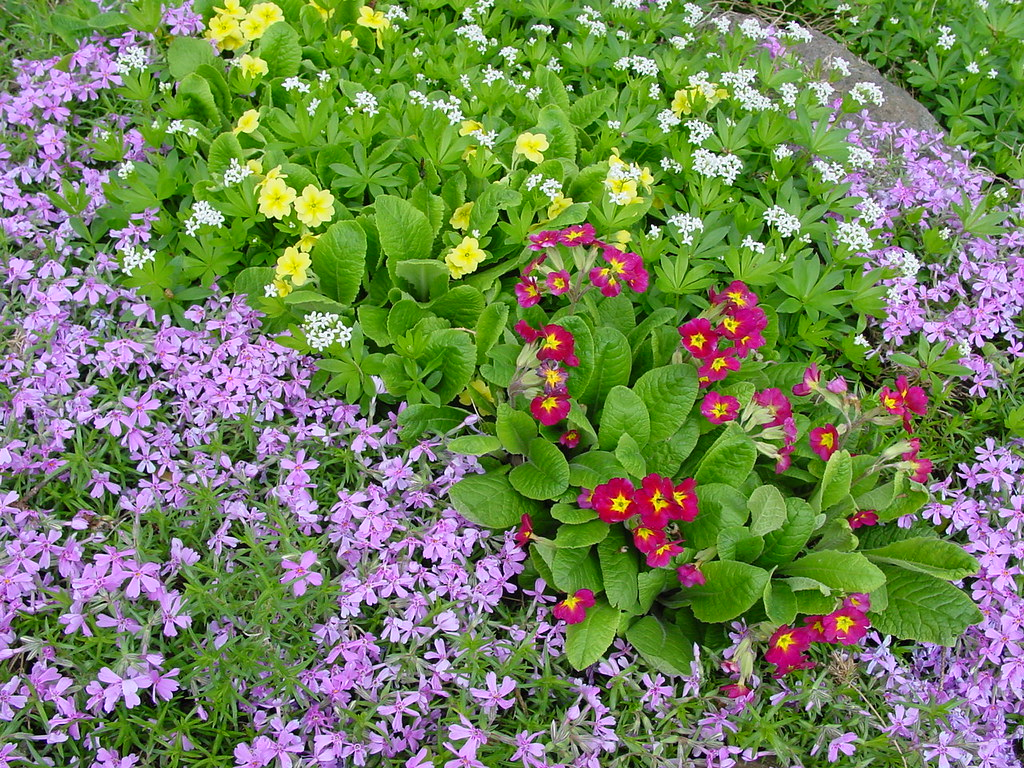 Spring Has Sprung   Rock Garden Flowers Blooming | Guenther ...
