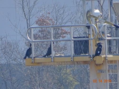 greatcormorant islandviewcrossing buckscounty pa sonyhx400v