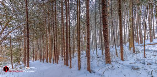 cold discoverwisconsin forest freeze frozen hike ice landscape nature outdoors panoramic pinetree retzernaturecenter snow trail travelwisconsin tree wi waukesha waukeshacounty winter wisconsin unitedstates us canon 5dmarkiii