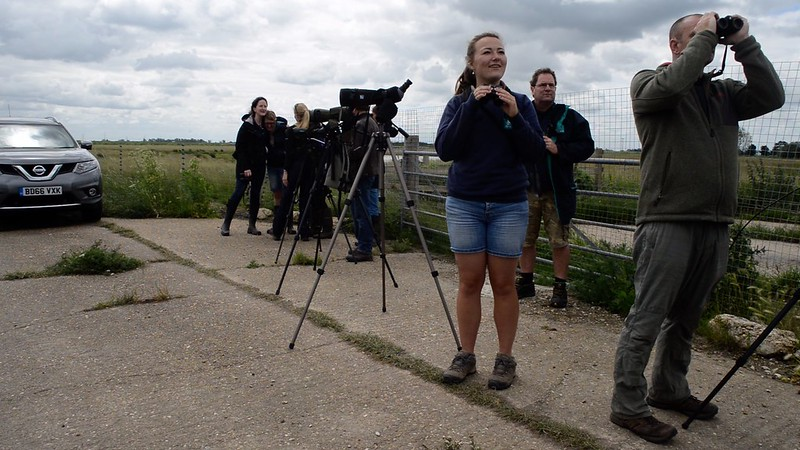 Project team observe birds after release 2017 WWT