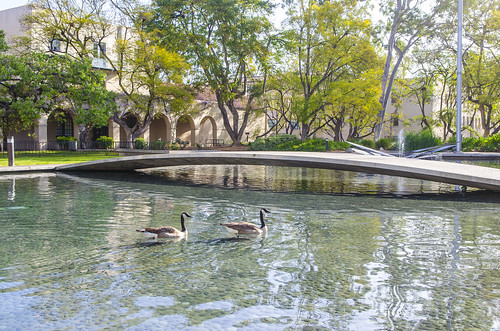 Geese-Millikan-Fountain_8807.jpg