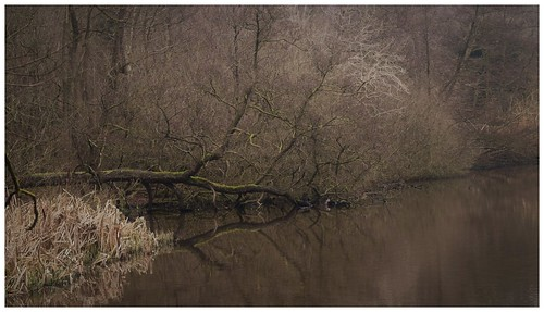laughtonpond rocheabbey southyorkshire pond gloomy rotherham