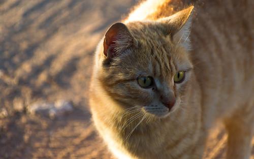 Cat | by MetebAli15