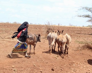 Woman pastoralist | by Nagarjun