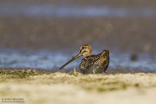Wader Quest 2015 Day 2 | by _alcedo_