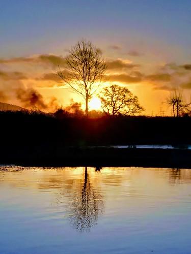 lake water pond reflection wet pentaxart light sun sunrise tree silhouette cameraphone phone clouds sky sundorne shrewsbury shropshire