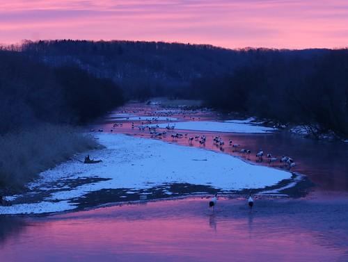 hokkaido sunrise crane otowabridge tancho redcrownedcrane