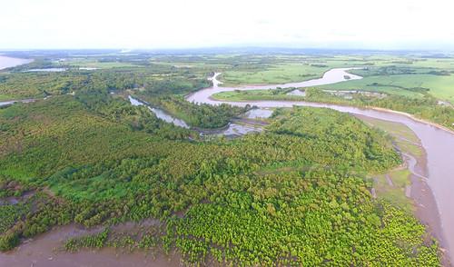 EAAF135 Negros Occidental Coastal Wetlands Conservation Area