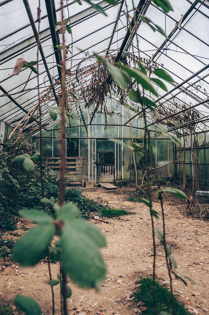 Forgotten greenhouse
