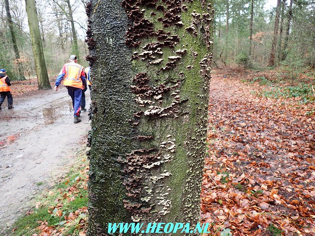 2018-01-31 Natuurtocht Soest  25 Km   (65)