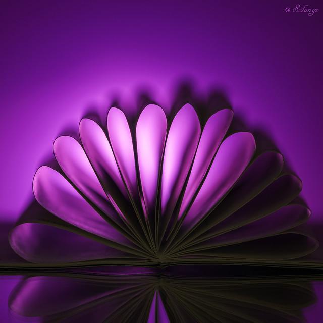Purple Monochromatic