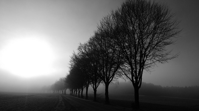 Allee im Nebel 2 - Fog avenue 2 - Explore Feb 2, 2018 #376