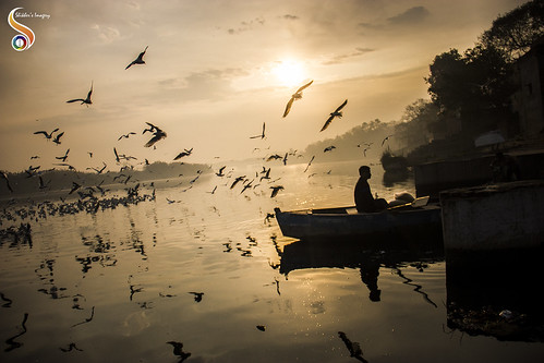 boat birds morning yamuna yamunaghat water river gulls flyingbirds horizon dawn silhouette sun seagulls siberiangulls scenary shikherâsimagery