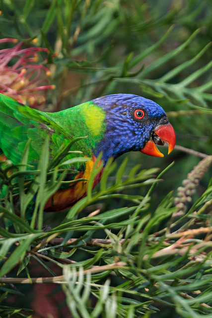 Previous: Colourful Visitor