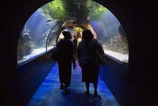 Shreveport Aquarium | by Shreveport-Bossier: Louisiana's Other Side