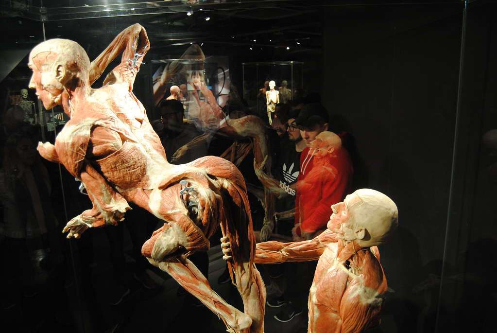 Students Explore Amsterdam S Unique Body Worlds Exhibition Flickr