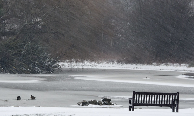 Falling snow and pond