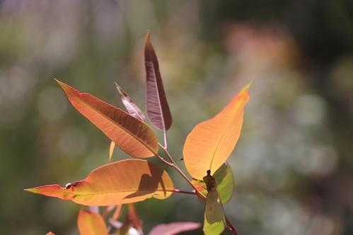 leaves sunshine