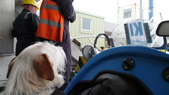 Shakey waiting to explore Kirkwall
