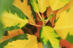 Botanical Things