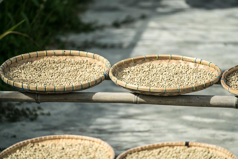 PRIME COFFEE CHẾ BIẾN ƯỚT