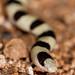 2018 Anza-Borrego Desert Photo Contest- Animals Category