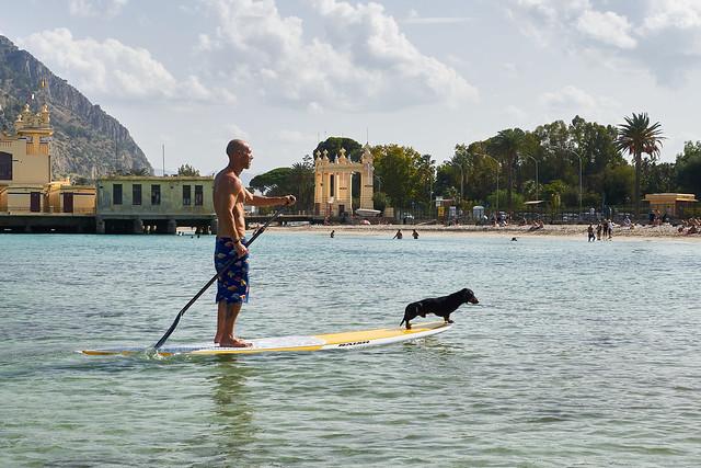 Surfing dog in Mondello