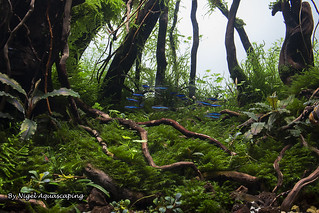 detail shot forest scape by nigel aquascaping | by nigel_kh