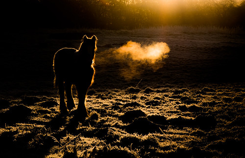 sunrise horse hoarfrost frost acoldstart rotherham bluemansbower rimlighting winter january southyorkshire lowkeyimage