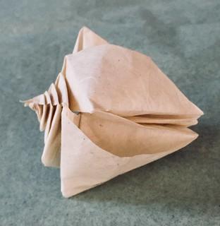 Bicolour Conch Shell. | 320x312