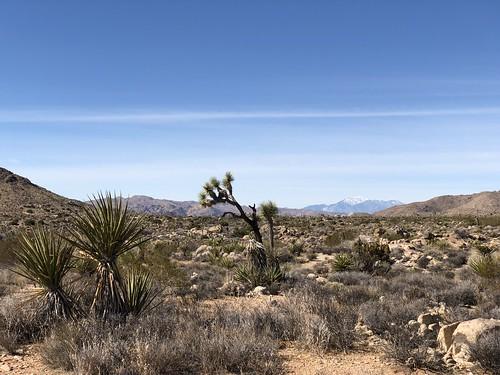 Joshua Tree - trail vista