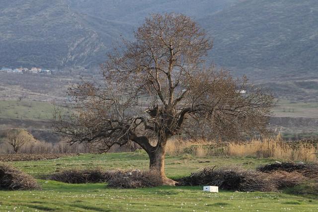 Wenê  Kurdîstan