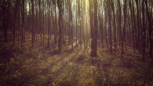 winter sun through the trees ... | by Redheadwondering