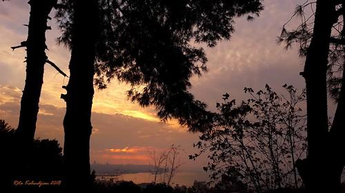 sunset trees silhouette sea beirut