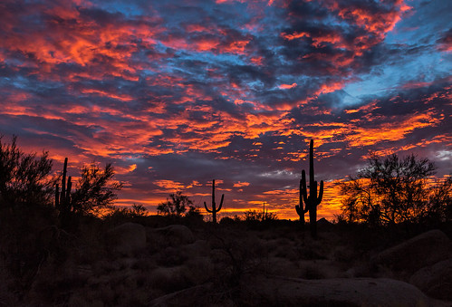 sunrise desert scenery northscottsdale cacti silhouette cactus arizona saguaro nature landscape clouds arizonapassages