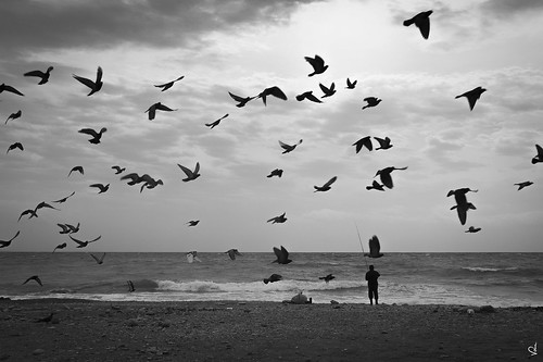 sea greece seascape birds bythesea bwseascape beach fisherman fishing