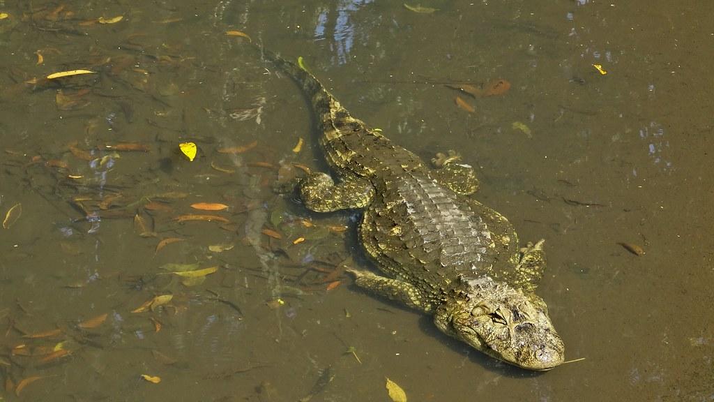 O Jacaré (série com 3 fotos)  //  The Alligator (series with 3 photos)