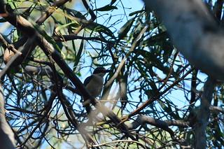 Azure Kingfisher 3