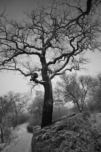 fog midwinter botanical garden landscapepark snow trees tower brooding blackandwhite blancetnoir monochrome fullspectrumconversion hoya r72 filter sony nex6 emount stockholm sweden