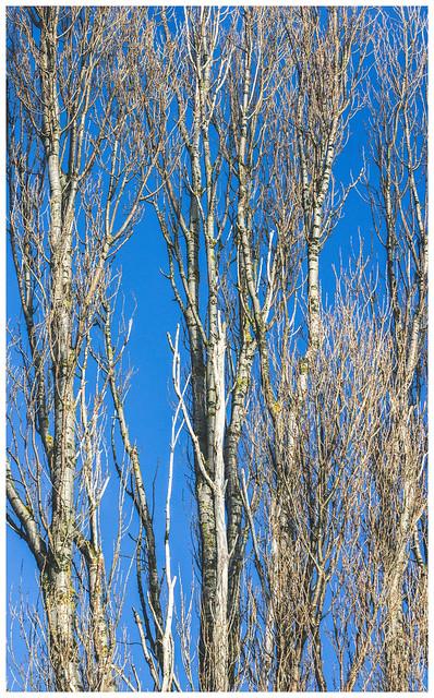 Branches, Dumbarton