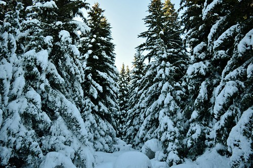 никонд5300 витоша europe българия европа nikond5300 micronikkor40mm winter зима планина mountain snow сняг борове боровидървета pinetrees