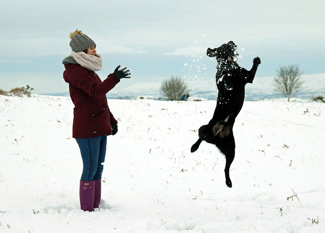 Charlie catching snowballs in the Brecon Beacons, Wales