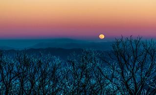 Wolf Moon | by marshallross
